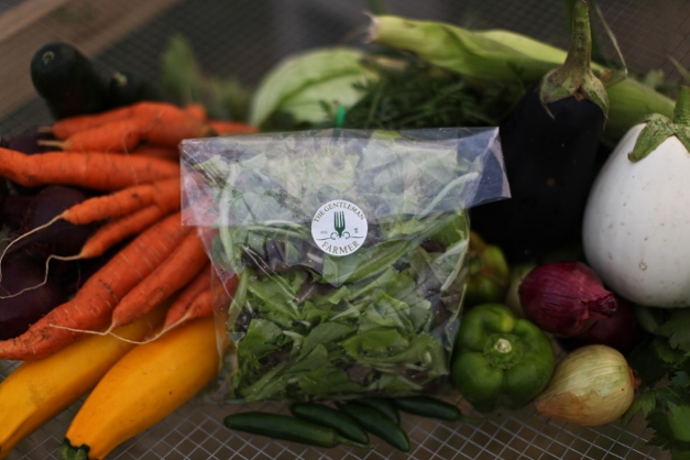 A summer CSA share contains veggies ranging from staples to exotics - Photograph courtesy of Christina Noel Photography