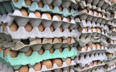 244. Gentleman Farmer's Guide to Choosing Healthy Eggs