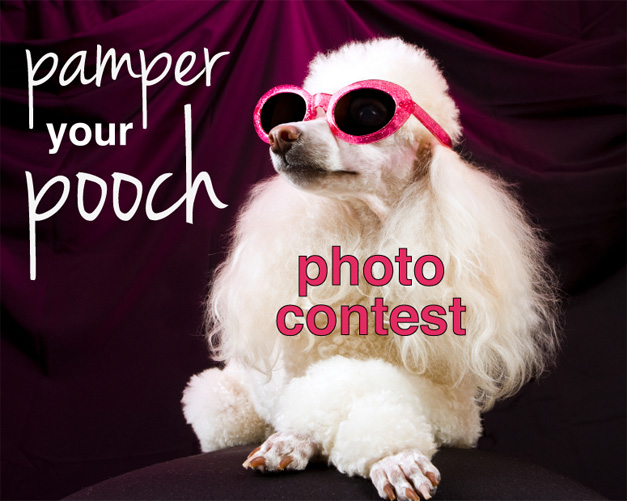 Post - Pampered Pooch Photo Contest - 2