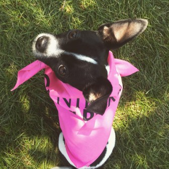 Post - Pamper Your Pooch - Janine McAlpin - 2