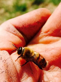 Post - The Gentleman Farmer - Honey Harvest - 9