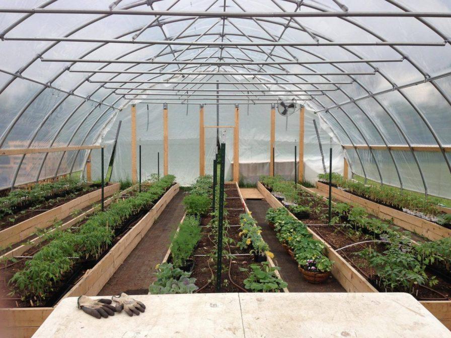 Smart Farm Seedlings