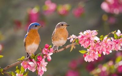 Barrington Area Spring Bird Walks & Hikes with Wendy Paulson