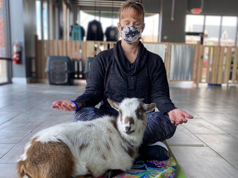 Arboretum of South Barrington Goat Yoga