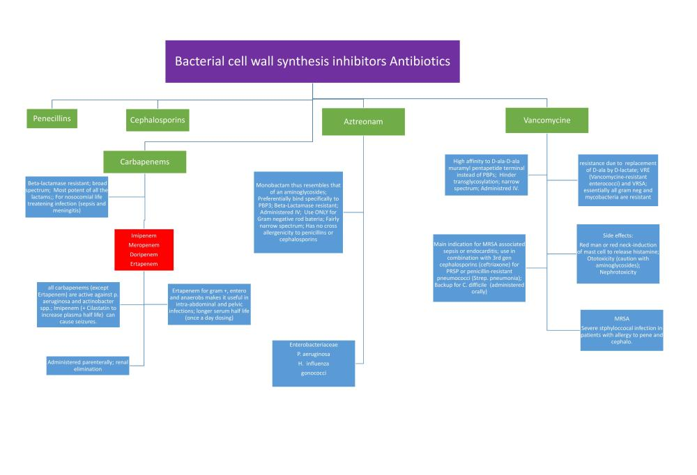 Cell wall inhibitor Antibiotic Flowchart (3/3)