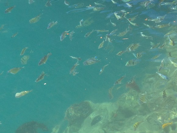 Yet More Fish