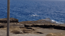 The two whales close to the shore. SO close!