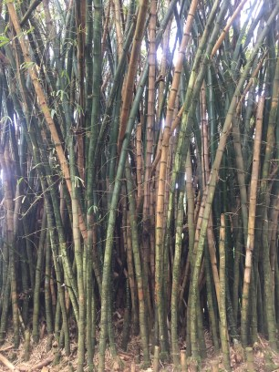 Love bamboo up close.
