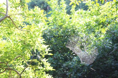 Plenty of spiders and webs on this trail.