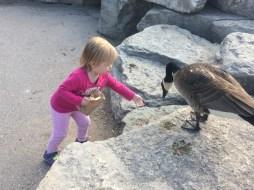Feeding birds is so much fun!