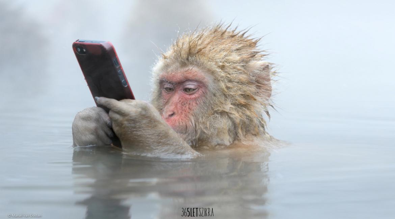 Okosabb vagy, mint egy majom. Majomkísérlet | Out of Your Box Magazinblog | 365letszikra.hu