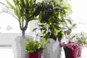 Φυτά που καθαρίζουν την ατμόσφαιρα: Να ποια να έχεις στο σπίτι σου - Shape.gr