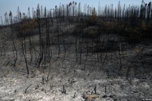 Πορτογαλία: Απουσία σχεδιασμού στην πρόληψη πυρκαγιών | DW | 28.09.2020