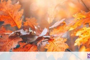 Σήμερα 01/09:  Φθινοπώριασε...