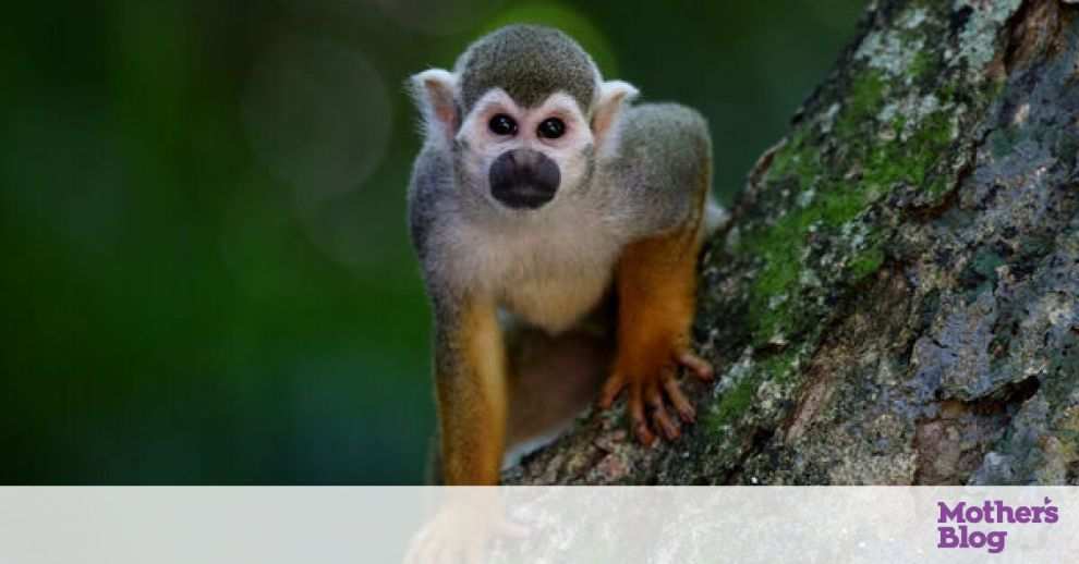 Βγήκε έξω από το σπίτι της και είδε μαϊμού να κάνει το απίστευτο (vid)
