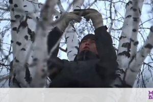 Σιβηρία: Μαθητής αναγκάζεται σκαρφαλώνει σε δέντρα για να βρει λίγο Internet