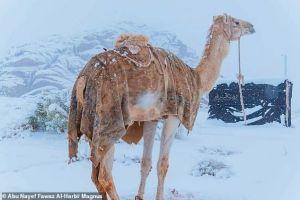 Χιόνισε στη Σαχάρα – Στους μείον 2 βαθμούς η θερμοκρασία στη Σαουδική Αραβία [εικόνες]