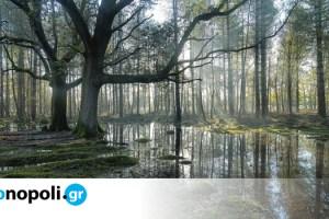 Wisdom and Nature: Ενα καλλιτεχνικό project για τη σωτηρία του Πλανήτη - Monopoli.gr