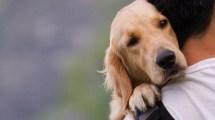 Στο ΥΠΕΣ η αρμοδιότητα για τα ζώα συντροφιάς