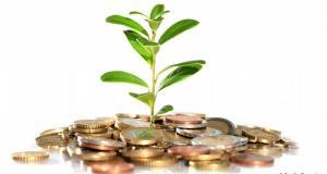 4 зелени магнита за пари у дома - растенията, които ще ни направят богати, ако ги засадим вкъщи