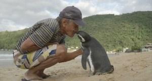 Пингвин плува 8000 км за да види човека който го е спасил (видео)