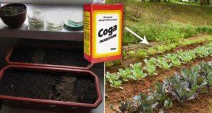 Содата бикарбонат – Верен помощник в градината – Има ли гъсеници-сода