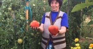 Рецептата на леля Руми за подхранване на домати която стана хит в нета!