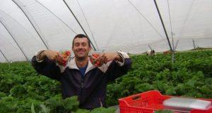 За пример! Българин в Англия направи най-голямата ферма за ягоди и малини!