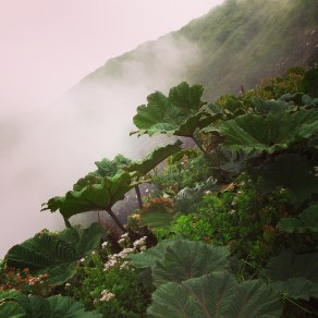 Mist rises from the creater at Volcan Poas