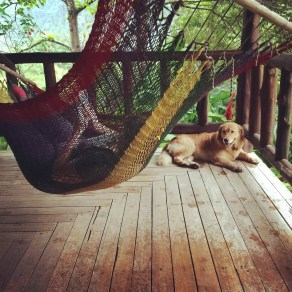 Hammock time with Ginger at Rancho Margot