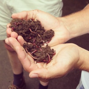 Rancho Margot's own compost