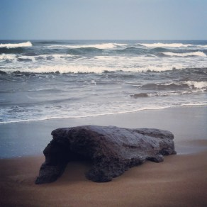 Driftwood on Tortuguero beach