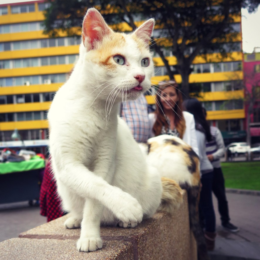 Parque Kennedy in Miraflores, Lima - Also known as Cat Park