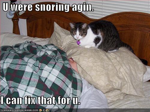 pillow-pal