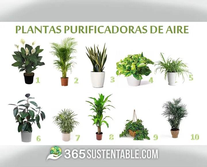plantas-purificadoras-del-aire-1
