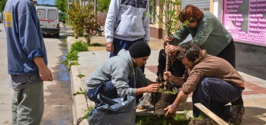 Una ciudad Frutal en Argentina. El grupo autogestivo de Necochea que planta frutales en las veredas