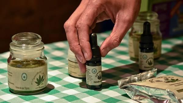 Abrirán una clínica de cannabis medicinal en Mendoza por iniciativa del médico Carlos Laje: ¿para qué funcionará?