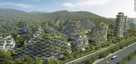 China Planta Bosques