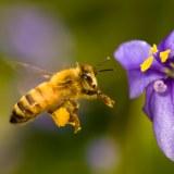 Qué pasaría si desaparecen las abejas
