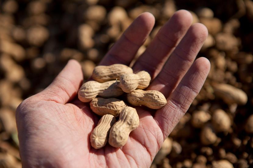 beneficios cacahuete-natural