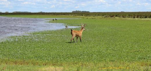 Buenos Aires Parque Nacional