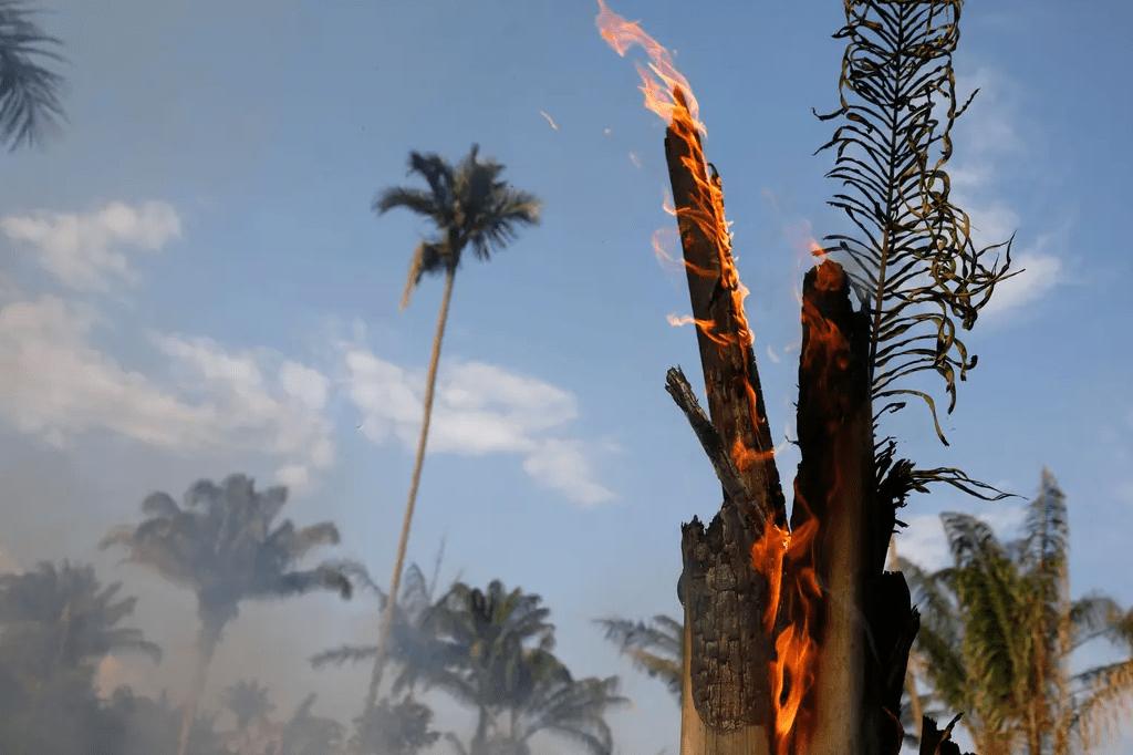 Incendios en el Amazonas: Los incendios forestales son comunes en la estación seca, pero también son provocados deliberadamente por agricultores que queman ilegalmente tierras para dedicarlas a la cría de ganado. Fuente: Reuters - Crédito: Bruno Kelly