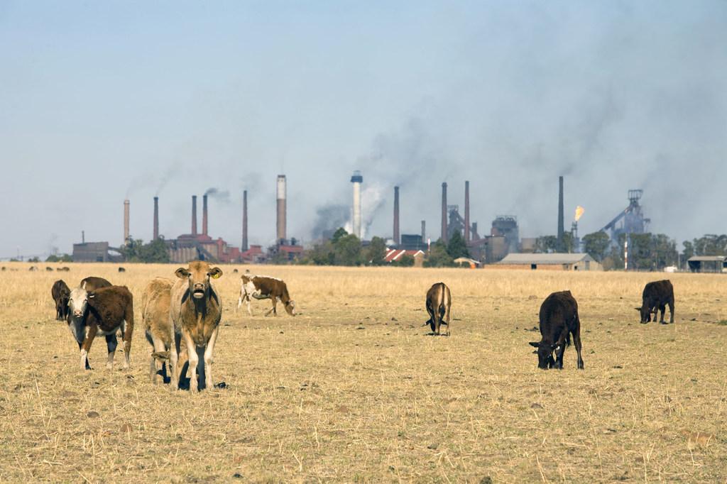 ONU Alerta: Banco Mundial/John Hogg Las industrias y la ganadería generan gases de efecto invernadero que causan el calentamiento global.