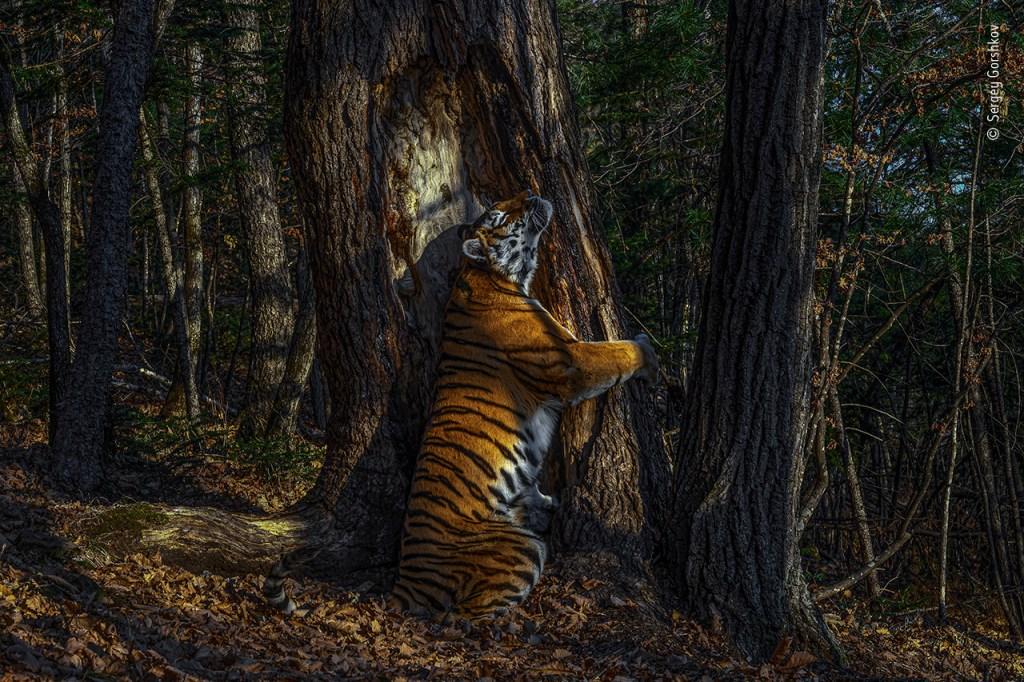 Sergey Gorshkov / Wildlife Photographer of the Year