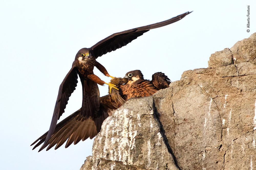 Alberto Fantoni / Wildlife Photographer of the Year