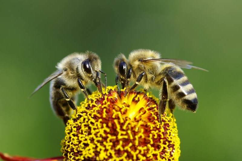 Salvar a las abejas debe ser nuestra prioridad