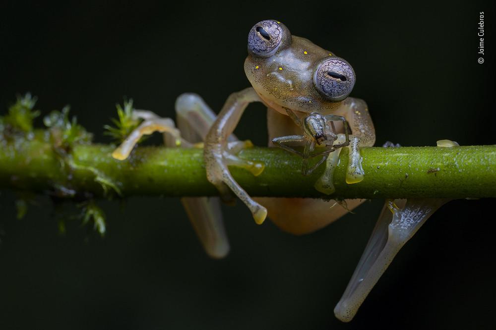 Jaime Culebras / Wildlife Photographer of the Year
