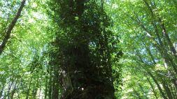 skouries forest