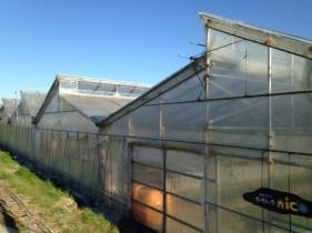 ちょっと特徴的な屋根のエコグリーンハウス