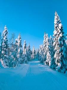 arbre neige santé